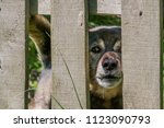 The Poor Dog Behind A Fence...