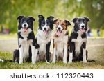 Group Of Happy Dogs Border...