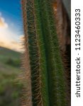 Small photo of Cacti from a recent outing here in Barbados