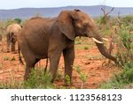 Small photo of A young male elephant, part of a larger herd, shows his agitation at our close presence in the Madikwe National Park and Game Reserve in South Africa.