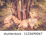 banana leaf under the tree. | Shutterstock . vector #1123690067