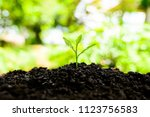 the seedling are growing in the ... | Shutterstock . vector #1123756583