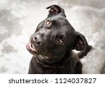 beautiful black dog outside the ... | Shutterstock . vector #1124037827
