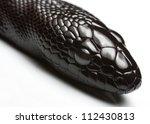 Juvenile Black Headed Python U...
