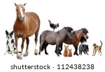 group of farm animals in front of white background - stock photo