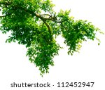 green leaves and branches on... | Shutterstock . vector #112452947