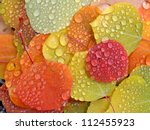 Colorful Aspen Leaves With...