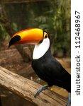 brazilian tucan | Shutterstock . vector #112468967