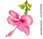 Stock photo hibiscus flower 112473533