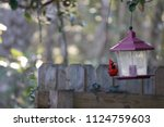 red male northern cardinal... | Shutterstock . vector #1124759603