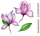 wildflower magnolia flower in a ... | Shutterstock . vector #1125321347