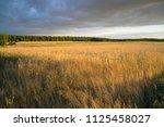 grain fields near lipce... | Shutterstock . vector #1125458027