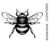 bumblebee hand drawn vector... | Shutterstock .eps vector #1125474503