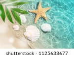 starfish and seashell on the... | Shutterstock . vector #1125633677