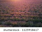 lavender texture. aerial... | Shutterstock . vector #1125918617
