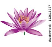 Water Lily  On White Background