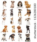 Stock photo set of twenty cute baby puppies isolated on white sized to print sheet on letter paper or for use 1126283183