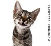 gray striped kitten with a displeasure grimace isolated white - stock photo
