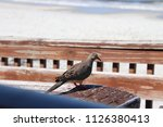 mourning dove bird perched on... | Shutterstock . vector #1126380413