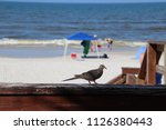 mourning dove bird perched on... | Shutterstock . vector #1126380443