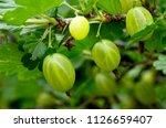 fresh organic green... | Shutterstock . vector #1126659407