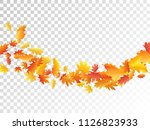flying oak and maple leaf... | Shutterstock .eps vector #1126823933