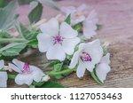 wooden board and common marsh...   Shutterstock . vector #1127053463