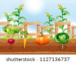 agriculture vegetables and... | Shutterstock .eps vector #1127136737
