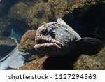 grotesque face fish | Shutterstock . vector #1127294363