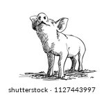 sketch of sniffing pig  hand... | Shutterstock .eps vector #1127443997