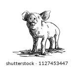 sketch of pig  hand drawn... | Shutterstock .eps vector #1127453447