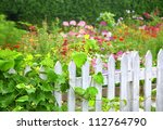 A grape vine growing on an old white picket fence surrounding a flower garden. - stock photo