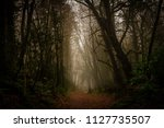scary and moody path through... | Shutterstock . vector #1127735507
