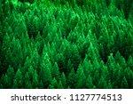 pine forest in wilderness...   Shutterstock . vector #1127774513