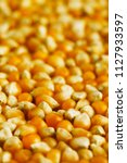 yellow corn seed background.... | Shutterstock . vector #1127933597