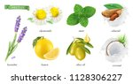 medicinal plants and flavors ... | Shutterstock .eps vector #1128306227