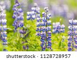 closeup of colorful blue and... | Shutterstock . vector #1128728957
