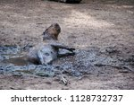 capybara in puddle mud  | Shutterstock . vector #1128732737