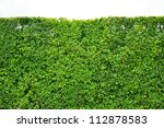 Tree Wall Background