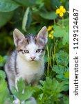 cute kitten in summer | Shutterstock . vector #1129124687