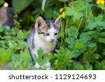 cute kitten in summer | Shutterstock . vector #1129124693