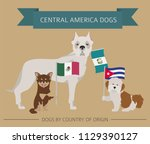 dogs by country of origin.... | Shutterstock .eps vector #1129390127