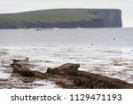 brown seals laying at the coast ... | Shutterstock . vector #1129471193