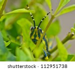 painted grasshopper sitting on henna leaves - stock photo