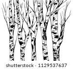 birch trees trunk with bark... | Shutterstock .eps vector #1129537637