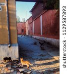 a lot of cats on feodosia... | Shutterstock . vector #1129587893