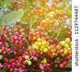 warm light coffee beans... | Shutterstock . vector #1129744487