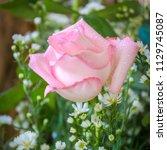 beautiful single pink rose | Shutterstock . vector #1129745087
