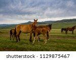 horses at mountain meadows ... | Shutterstock . vector #1129875467