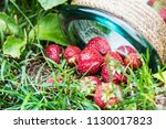 ripe strawberries and a glass... | Shutterstock . vector #1130017823